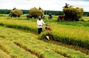"""Agribank chung tay giải quyết """"bài toán hóc búa"""" Bảo hiểm nông nghiệp"""