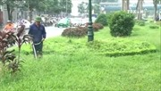 Hà Nội giảm 40% đơn giá cắt cỏ vườn hoa, dải phân cách