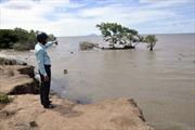 Nhiều nơi không còn rừng ngập mặn bảo vệ đê biển