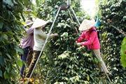 Cần hỗ trợ đất cho đồng bào ở Đắk Lắk