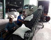 Xuất khẩu gạo đạt 4,2 triệu tấn