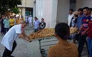 Bình Định: Sản phụ tử vong do thuyên tắc ối