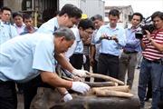 Tiêu hủy 2 tấn ngà voi và 70kg sừng tê giác