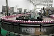 SCIC chuẩn bị bán vốn tại Vinamilk