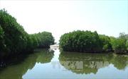 Tăng cường bảo vệ, khôi phục hệ sinh thái biển ở các đầm, vịnh
