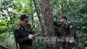Sơn La chi trả trên 110 tỷ đồng dịch vụ môi trường rừng