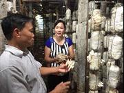 Trồng nấm - thế mạnh mới của nông nghiệp Bắc Giang