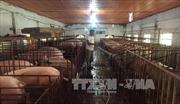 """Doanh nghiệp thực phẩm """"than"""" việc sử dụng chất cấm trong chăn nuôi"""