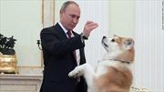 Chó cưng sủa váng phòng khi ông Putin đón khách