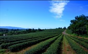 Tái cơ cấu nông nghiệp Tây Nguyên