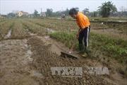 Hỗ trợ tích cực cho người dân bị thiệt hại do mưa lũ