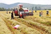 Kết quả sơ bộ tổng điều tra nông thôn, nông nghiệp, thủy sản