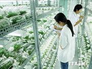 Năng suất nông nghiệp tăng chậm hơn các nước cùng trình độ trong khu vực