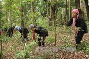 Phát huy hiệu quả tổ bảo vệ rừng thôn bản