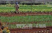 Người Mỹ hối thúc ông Trump đẩy mạnh hợp tác nông nghiệp với Cuba