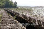 Gần 40km đê biển ở Kiên Giang sạt lở nghiêm trọng