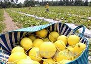 An Giang phấn đấu có nhiều mô hình nông nghiệp trên 500 triệu đồng/ha