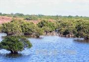 'Đất ngập nước giúp giảm nhẹ thiên tai'