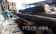 Kim ngạch xuất khẩu gỗ và đồ gỗ Việt Nam đứng đầu khu vực ASEAN