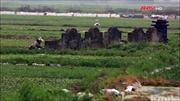 Đất chật, Hà Nội trồng rau sạch trên mộ, vô tư bán đầy thị trường