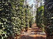 Đắk Nông quy hoạch 20.000 ha phát triển nông nghiệp công nghệ cao