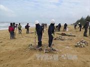 Xác minh nguyên nhân dầu vón cục dạt vào bãi biển Quảng Nam