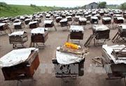 Thu nhập cao từ nghề nuôi ong lấy mật tại đảo Cát Bà