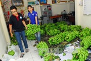 Chuối 'ế' và câu chuyện 'giải cứu' nông sản Việt