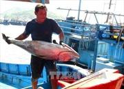 Nhiều chính sách hỗ trợ ngư dân bám biển
