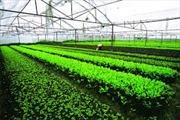 Bình Thuận xây dựng trung tâm cung ứng nông sản sạch