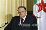 Rộ tin Tổng thống Algeria qua đời sau vụ huỷ tiếp bà Merkel