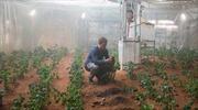 Triển vọng trồng khoai tây trên Sao Hỏa