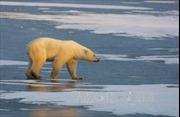 Con người chịu trách nhiệm chính làm tan băng tại Bắc Cực