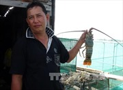 Tôm, cá chết hàng loạt chưa rõ nguyên nhân tại Khánh Hòa