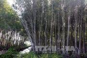 Tăng cường quản lý quy hoạch rừng và đất lâm nghiệp