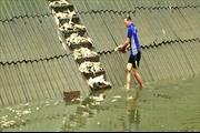 Bộ Công Thương điều tra 'nghi án' cá chết hàng loạt ở Lào Cai
