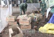Quảng Ninh bắt giữ và tiêu hủy 150 kg gà thịt không rõ nguồn gốc
