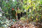 Nắng nóng kéo dài, nguy cơ cháy rừng ở Tây Ninh ở mức cực kỳ nguy hiểm