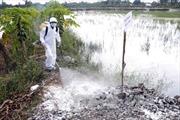 Khó khăn trong kiểm soát dịch cúm gia cầm
