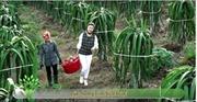 Đầu tư nông nghiệp công nghệ cao – 'chìa khóa' phát triển 'tam nông' bền vững