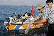 Ninh Thuận thả hơn 1 triệu con tôm giống ra biển