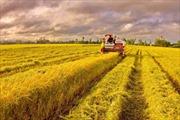 Mở rộng hạn điền: Không để nông dân mất đất và bần cùng hóa