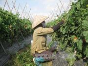 Tích tụ ruộng đất làm sao để nông dân được hưởng lợi nhiều nhất