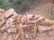 Quảng Ninh: Phát hiện hầm đạn pháo ở trường bắn của quân Pháp thời chiến tranh