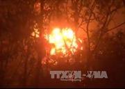 An Giang: Cháy lớn thiêu rụi gần 30 ha rừng tràm