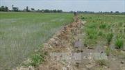 Đồng Tháp chấn chỉnh tình trạng khai thác đất mặt ruộng