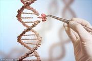 Công nghệ chỉnh sửa gien đem lại hy vọng cho nhiều bệnh nhân trên thế giới