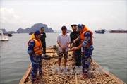 Quảng Ninh tiêu hủy 9 tấn hàu giống không rõ nguồn gốc
