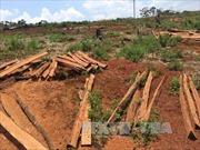 Để xảy ra phá rừng nghiêm trọng, 5 cán bộ kiểm lâm ở Đắk Nông bị kỷ luật