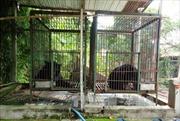 Đồng Nai còn 84 cá thể gấu ngựa bị nuôi nhốt
